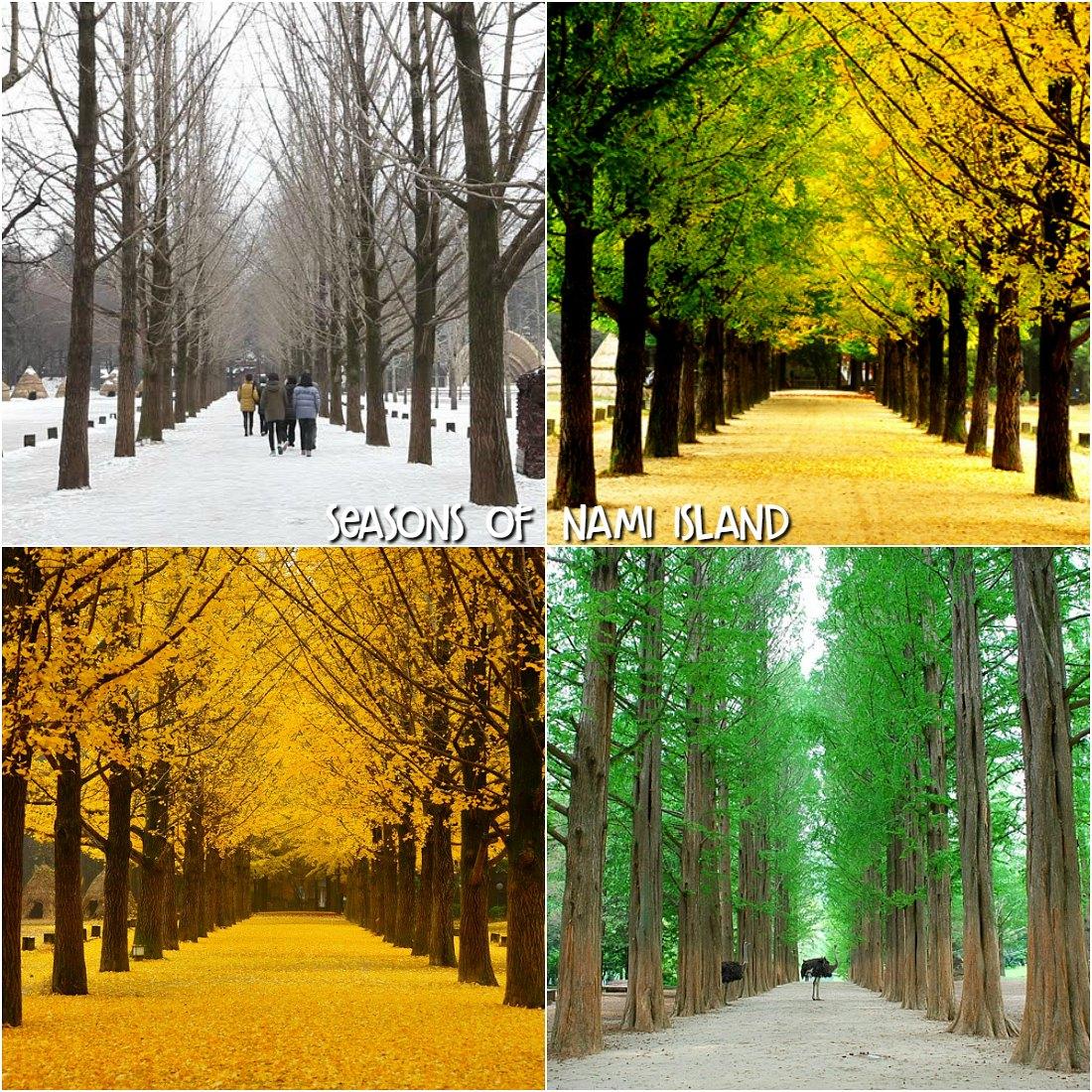 ĐẢO NAMI MÙA HÈ - cây xanh mát mẻ
