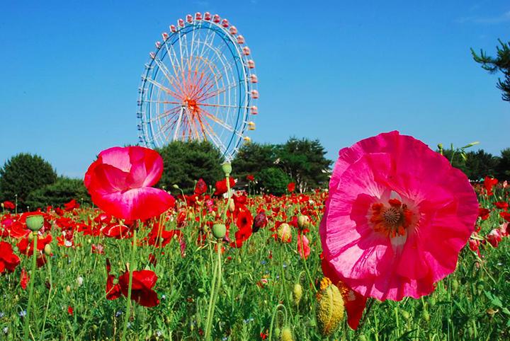 Kết quả hình ảnh cho vòng đu quay ở hitachi