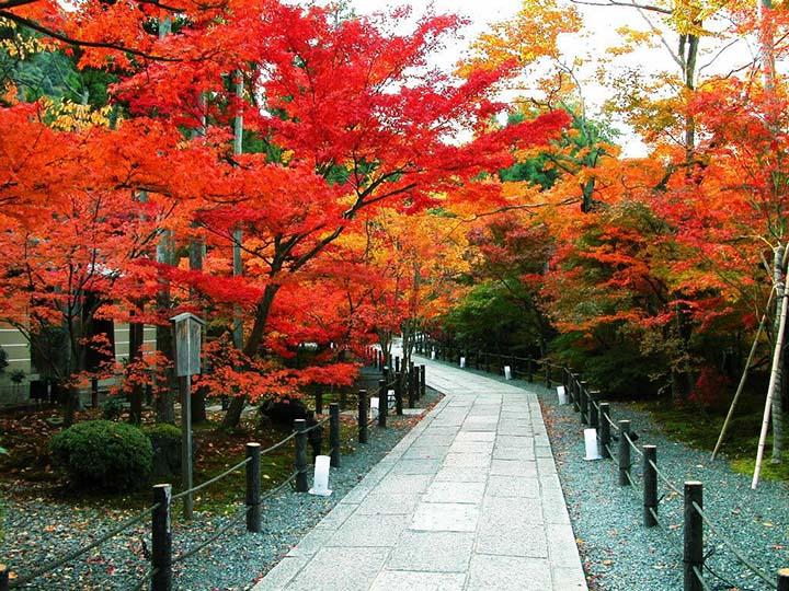 Image result for mùa lá đỏ nhật bản tháng mấy