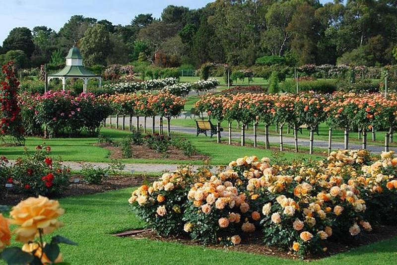 Kết quả hình ảnh cho vườn Hoa Hồng lớn nhất Melbourne